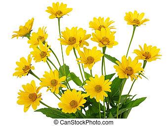 amarillo, margarita, flor