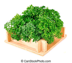 curly parsley in the wooden box