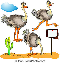 Illustration ostrich runs, covers head sand and coststands...