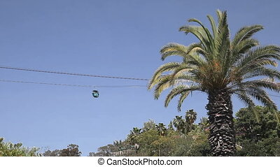 Cableway and palm tree