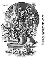 Senior maintain a garden