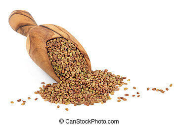 Alfalfa Seed - Alfalfa seed in an olive wood scoop over...