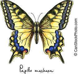 Butterfly Papillo Machaon. Watercolor imitation. Vector...