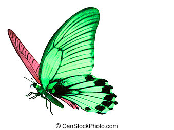 Mysterious butterfly on white background