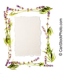 Lavender frame isolated on white. Sheet of aged watercolour...