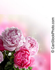 Peonies card - Beautiful pink peonies on white background....