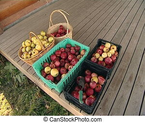 apples boxes baskets - apples strapped in boxes and baskets...