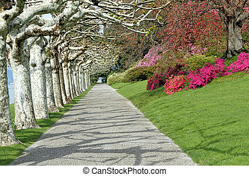 Alley in Gardens of Villa Melzi dEril in Bellagio, Lombardy,...