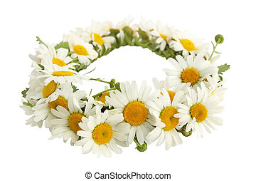 wreath of chamomiles - a wreath of white chamomiles on a...
