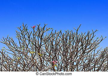 Branch of Leelawadee plant on blue sky