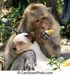 Monkey and domestic cat - Monkey playing with a domestic cat...