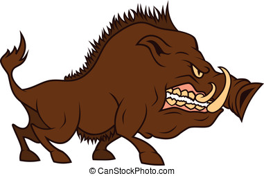 Angry cartoon boar - an angry boar  bares one's teeth