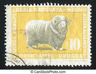 Corriedale Ram - URUGUAY - CIRCA 1967: stamp printed by...