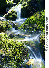 Brook - A small, rushing brook in a dark, green wood.