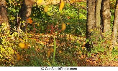 Wild autumn forest