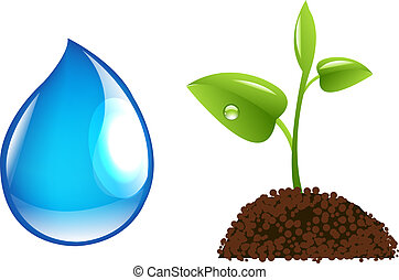 Water Drop And Sprout - Water Drop And Green Sprout, Vector...