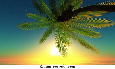 palm tree and horizon