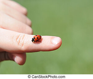 A close-up view of a childs hands hold a bright red ladybug