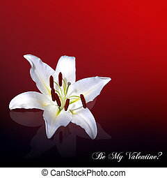 White lily Valentine card - A white oriental lily reflected...