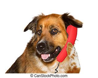 Dog is talking on telephone, on white background