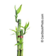 Chinese lucky Bamboo with red ribbon - happiness symbol,...