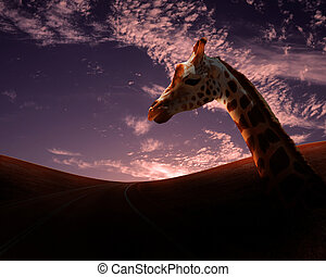 African animals in savannah - Picture of african animals in...