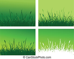 carming grass and dandelion flower background