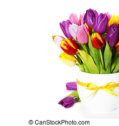 fresh tulips - fresh spring tulips on white background