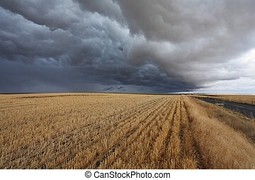 Thunderclouds above fields after harvesting. Montana, the...