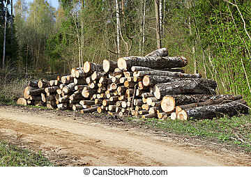 A pile of logs in the forest near - A pile of logs in the...