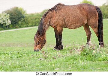 Portrait of farm horse animal in rural farming landscape