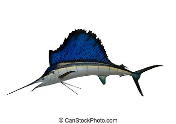 Sailfish Mount - Sailfish mount caught at StAugustine,...