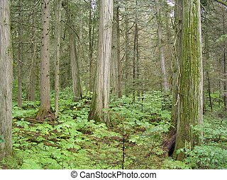 Lush Forest - trees and foliage in a lush forest