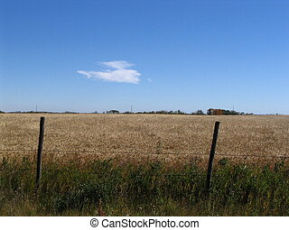 Farmers Field - a grain field with fence on a sunny day