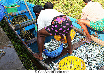 Fishing Kochi - fishermen selling fish from a boat in Kochi,...