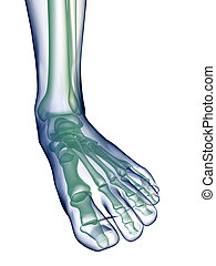 Foot x-ray on white