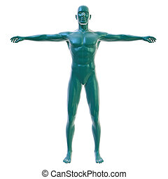Male body on white, front view - 3d rendering of a male body...