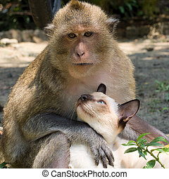 Monkey and cat - Monkey and domestic cat , Thailand