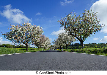 road with alley of cherry trees in bloom - spring road with...