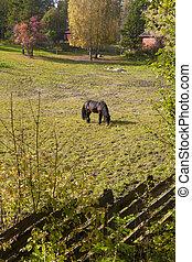 Fenced horse farm with many trees