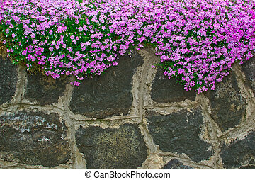 flowers on the garden walls of rough stone