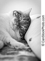 Awakening - A beautifull cat awakening in the bed