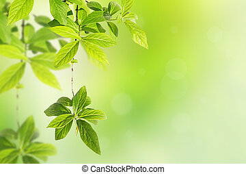 Springtime background with green leaves