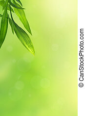 Beautiful green background with bamboo leaves