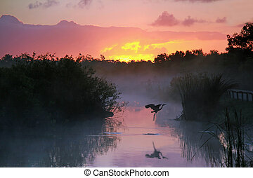 Sunrise in the Everglades - Everglades National Park at...
