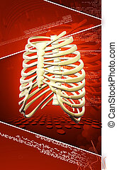 Rib cage - Digital illustration of rib cage in colour...