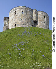 ancient castle - bluebells and daisy flowers growing on the...