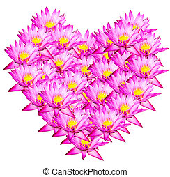 Heart  - Pink lotus Heart shape on white background
