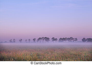 Dutch pasture at sunrise - pasture in Groningen covered with...
