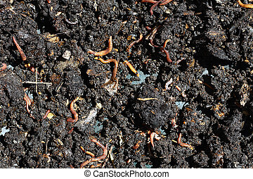 humus with earthworms - humus compost with large amount of...
